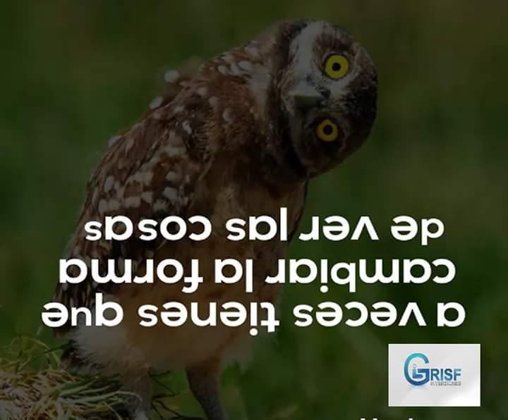 FB_IMG_1564569613783